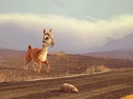Caminandes: Llama Drama. Short Movie