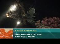 Предельная глубина. Выпуск 3 Коралловые рифы Ночного Дахаба