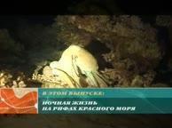 Предельная глубина. Выпуск 5 Ночное погружение на рифы Дахаба