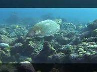 Предельная глубина. Выпуск 9 Мальдивы, дайвинг-сафари в Индийском океане