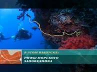 Предельная глубина. Выпуск 11 Красное море, ночные охотники