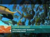 Предельная глубина. Выпуск 13 Египет, Красное море, жизнь кораллового рифа