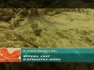 Предельная глубина. Выпуск 14 Живописные лагуны Красного моря