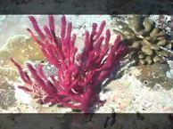 Предельная глубина. Выпуск 15 Мальдивский архипелаг — рай в Индийском океане