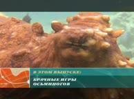 Предельная глубина. Выпуск 20 Кальмары — реактивные «чернильницы»