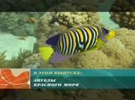 Предельная глубина. Выпуск 23 Красное море, фотоохота за бабочками
