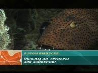 Предельная глубина. Выпуск 25 Каменные окуни Красного моря и Мальдив