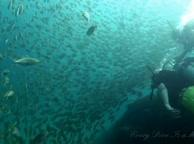Diving Thailand Sail Rock 10 December 2014