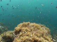 Diving Thailand Sail Rock 13 September 2014