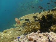 Diving Thailand Sail rock 22 May 2014 underwater video