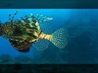 Под водой. Выпуск 6 Египет