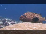 Под водой. Выпуск 14 Архипелаг Палау
