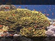 Под водой. Выпуск 18 Коралловые рифы
