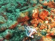 Под водой. Выпуск 27 Остров Верде